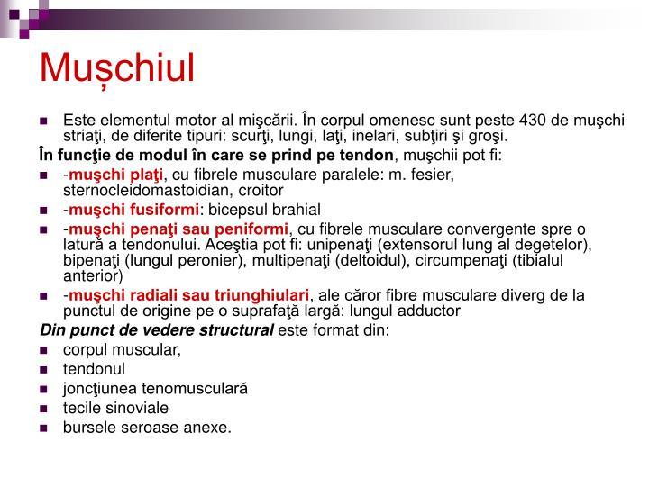 Mușchiul