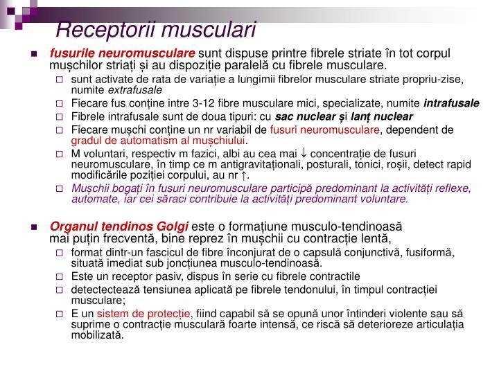 Receptorii musculari