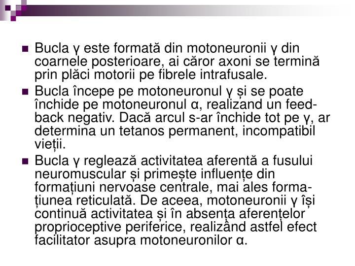Bucla