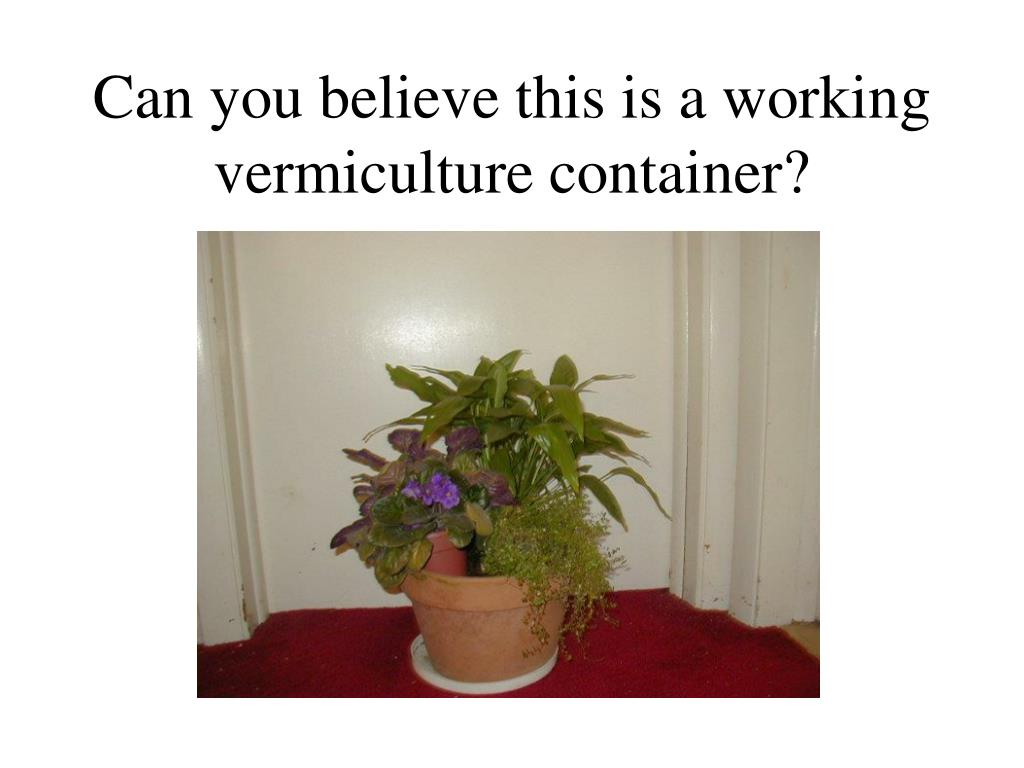 Can you believe this is a working vermiculture container?