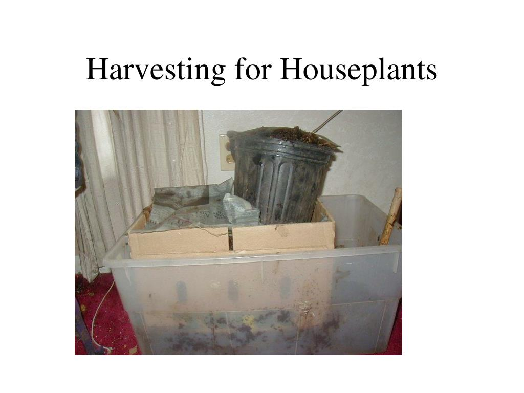 Harvesting for Houseplants