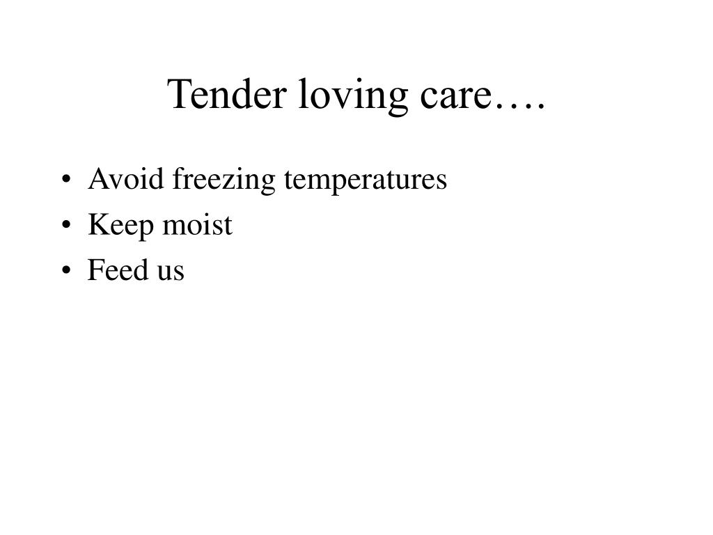 Tender loving care….