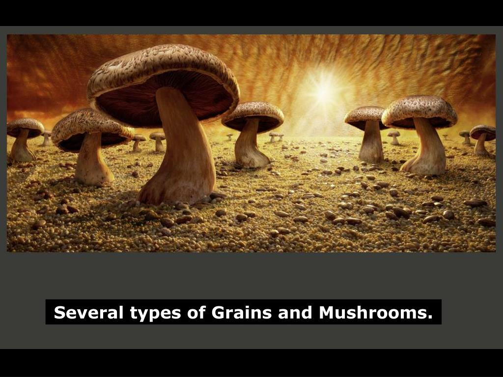 Several types of Grains and Mushrooms.