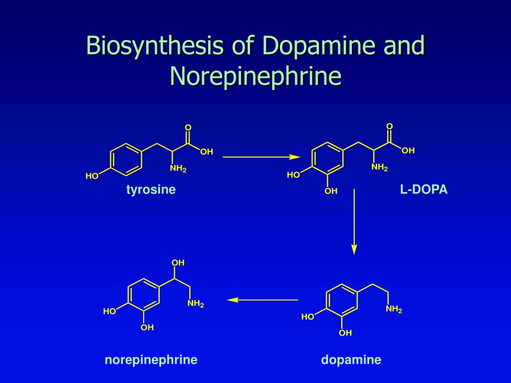 Biosynthesis of Dopamine and Norepinephrine
