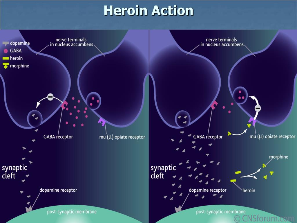 Heroin Action