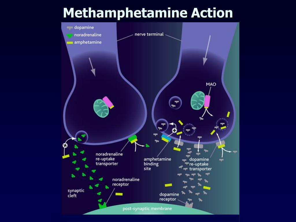 Methamphetamine Action