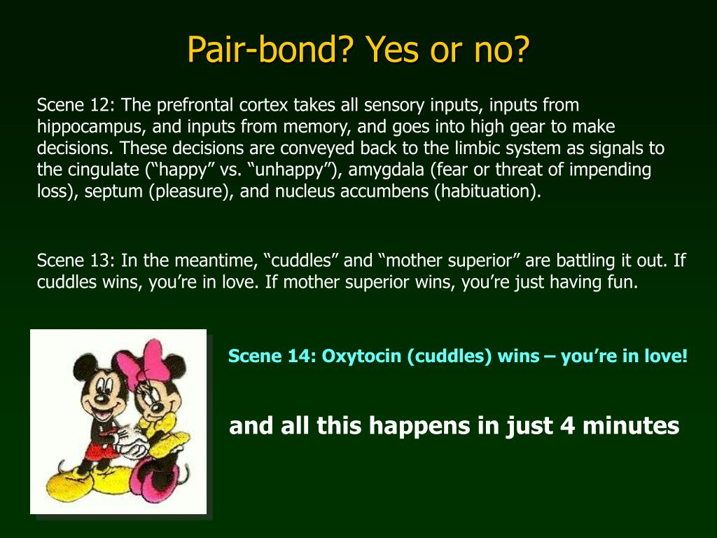 Pair-bond? Yes or no?