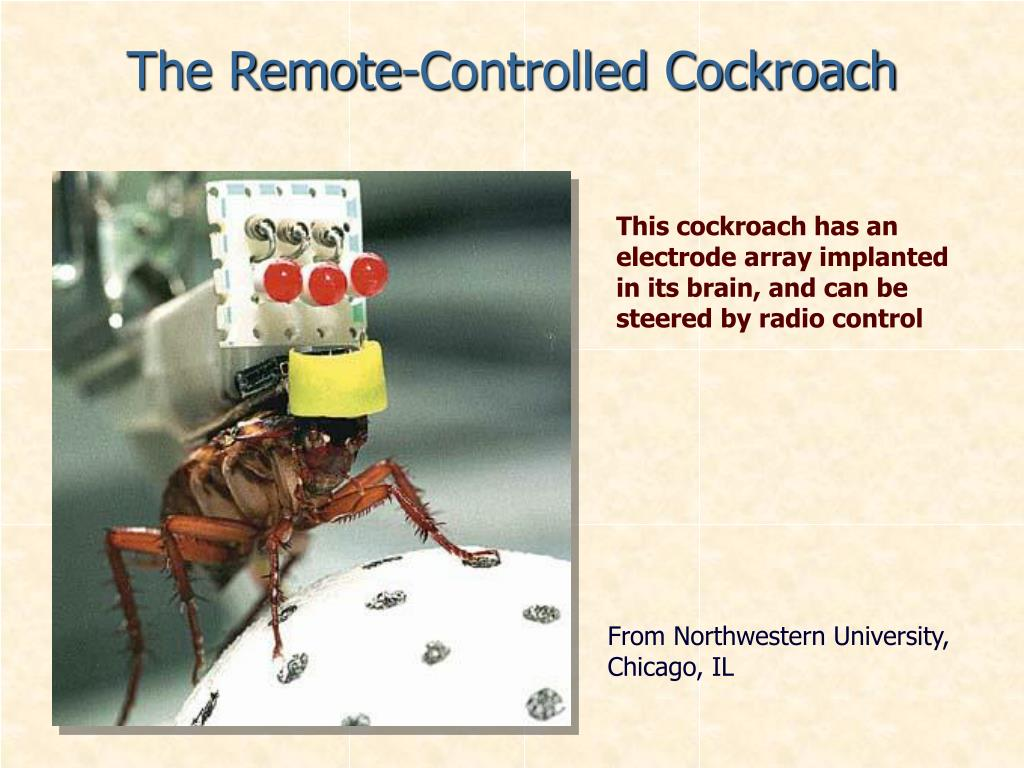 The Remote-Controlled Cockroach
