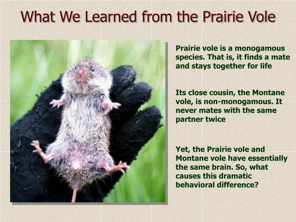 What We Learned from the Prairie Vole