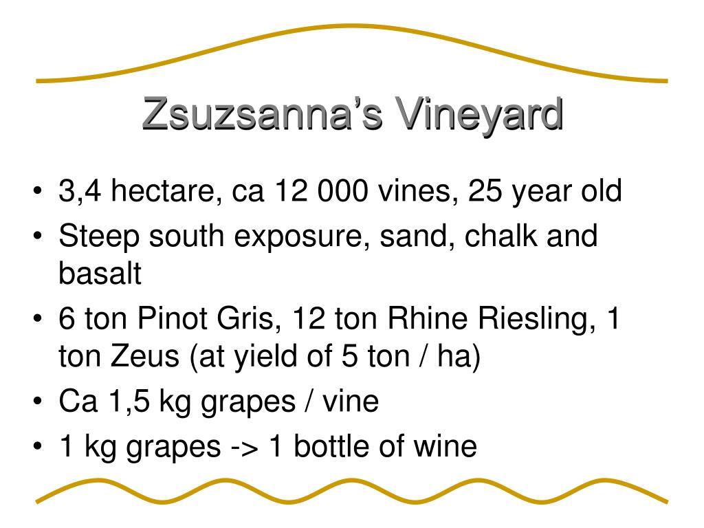 Zsuzsanna's Vineyard