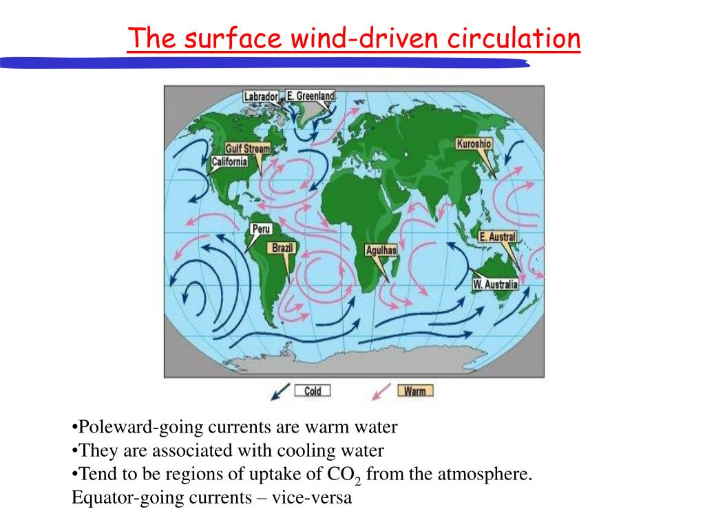 The surface wind-driven circulation