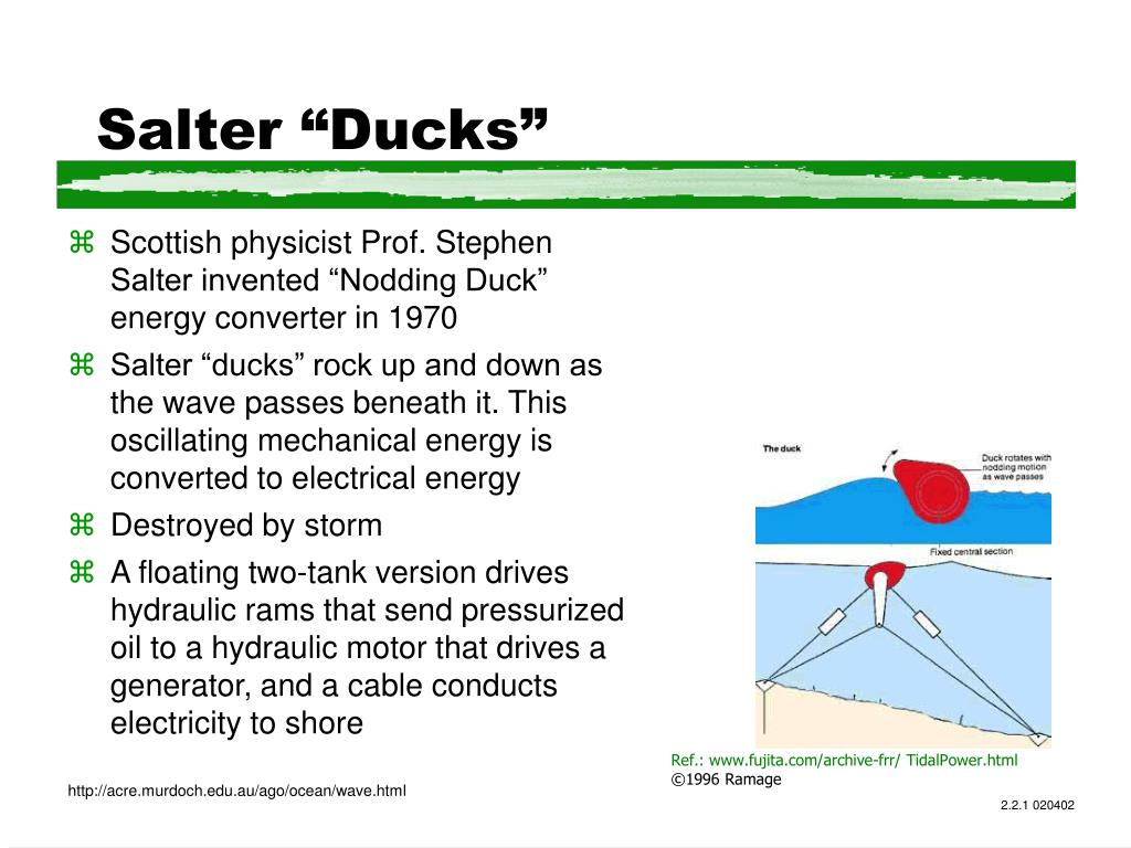 """Salter """"Ducks"""""""