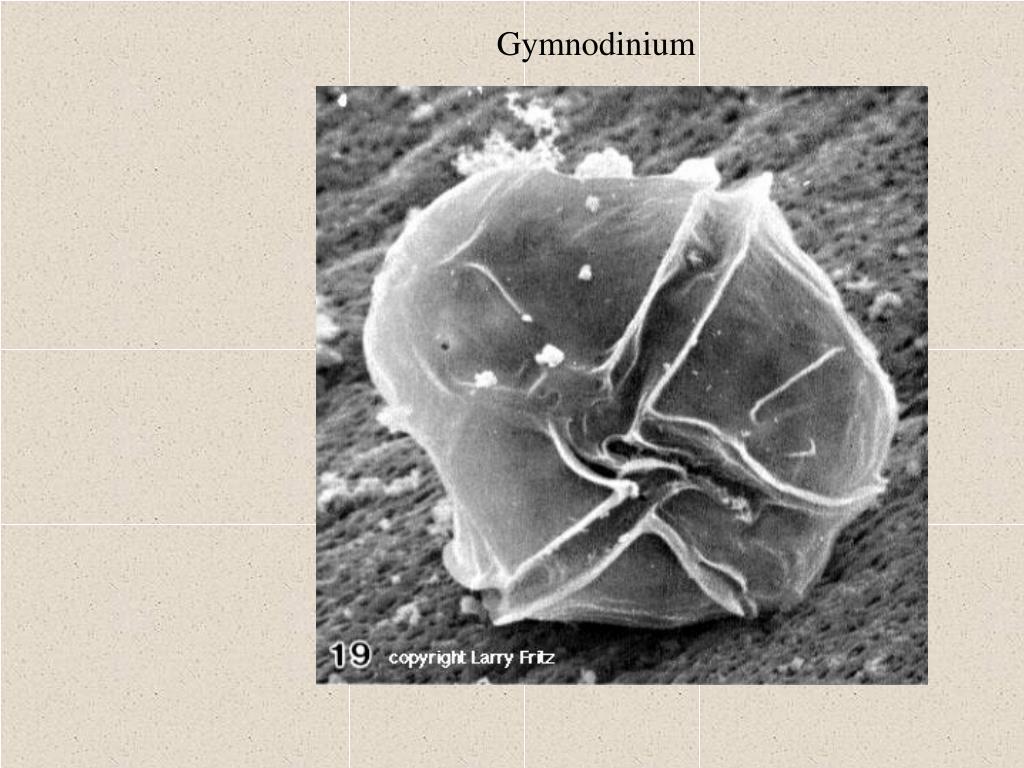 Gymnodinium