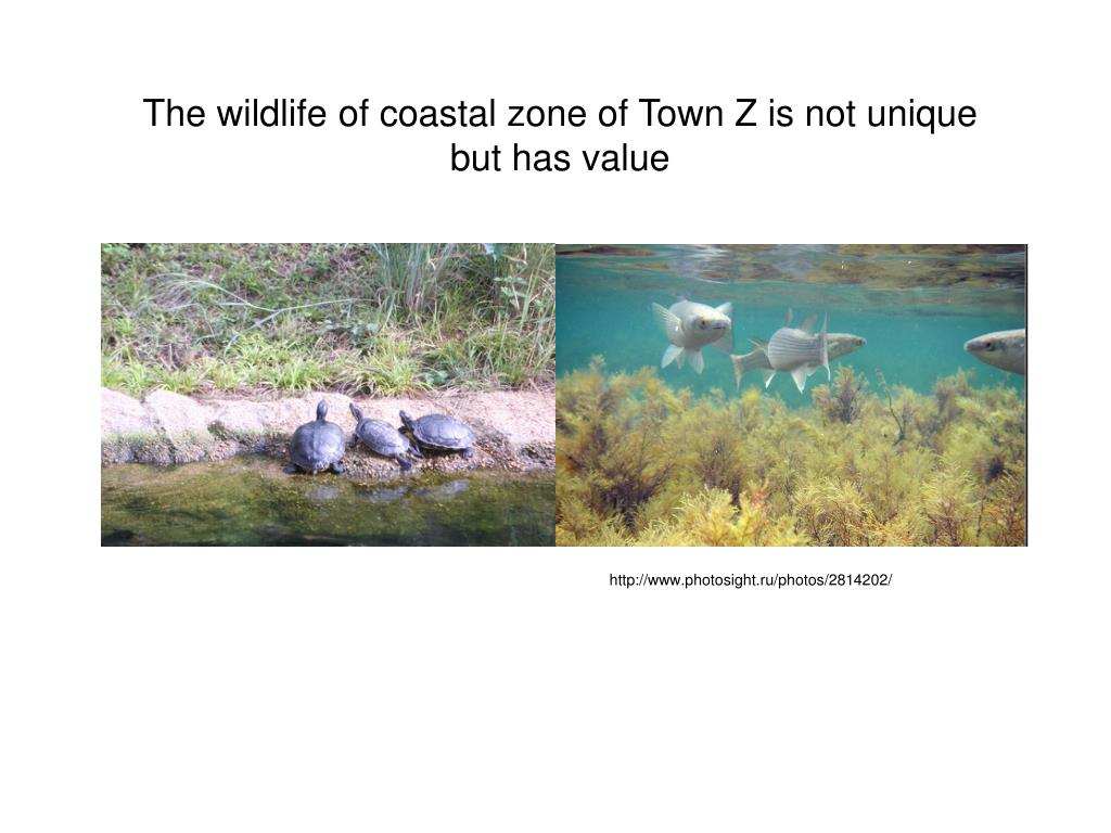 The wildlife of coastal zone of Town Z is not unique