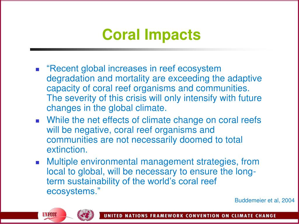 Coral Impacts