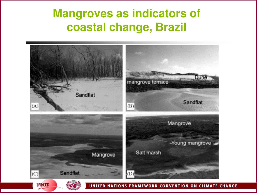 Mangroves as indicators of coastal change, Brazil