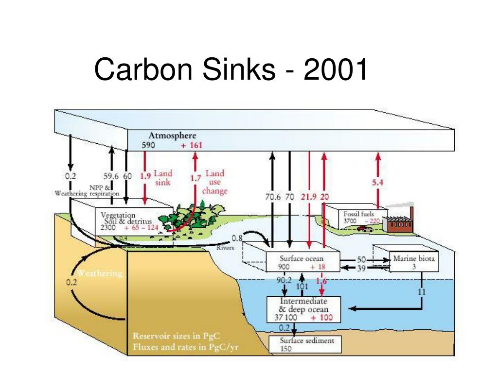 Carbon Sinks - 2001