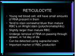 reticulocyte