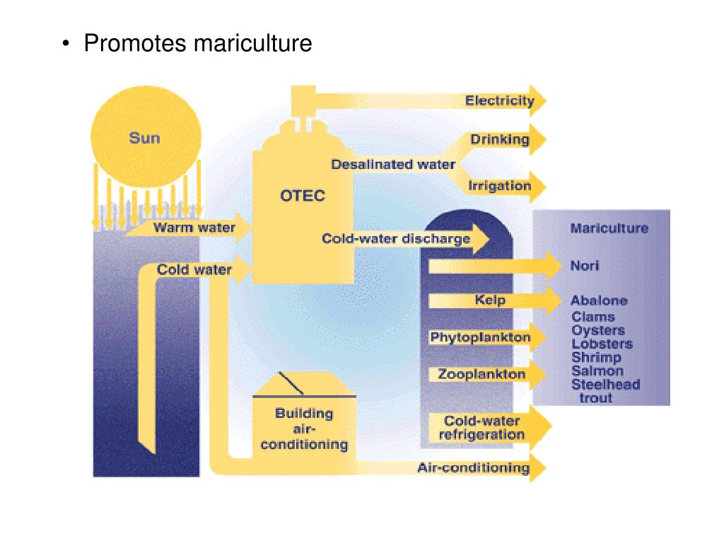 Promotes mariculture