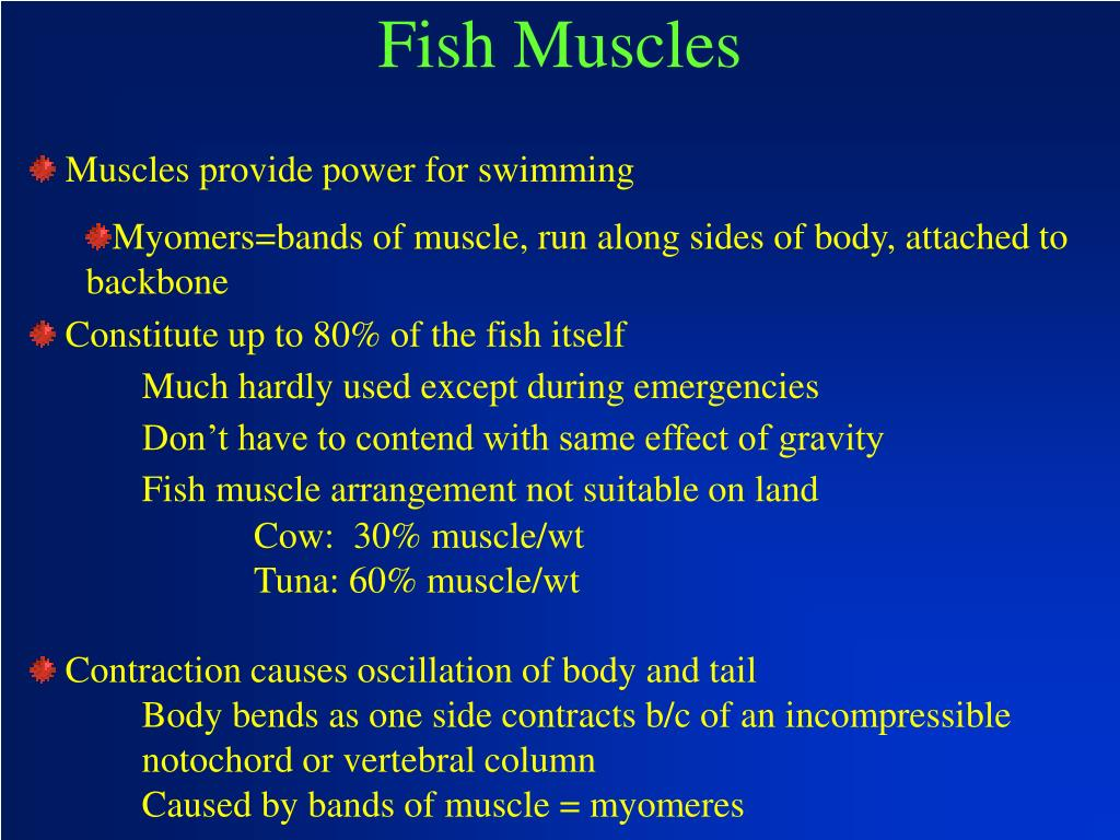 Fish Muscles