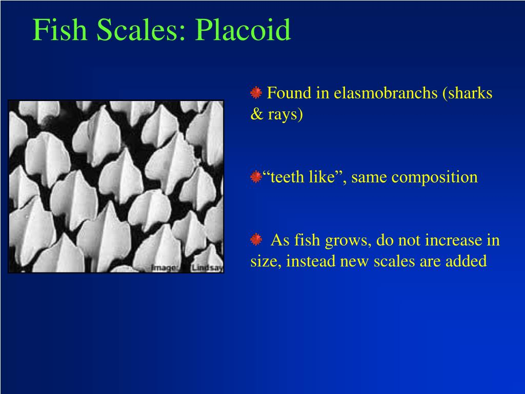 Fish Scales: Placoid