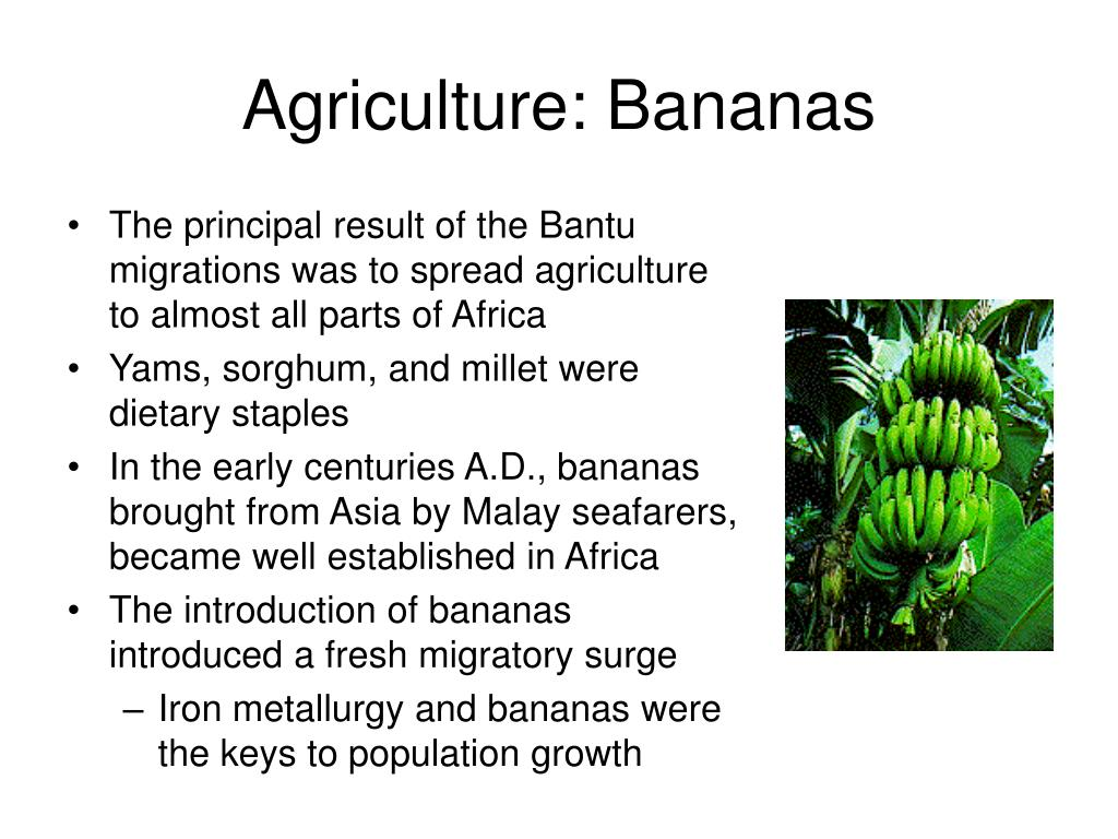 Agriculture: Bananas