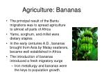 agriculture bananas