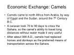 economic exchange camels