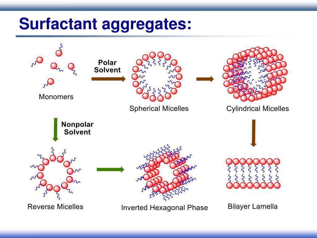 Surfactant aggregates: