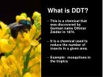 what is ddt
