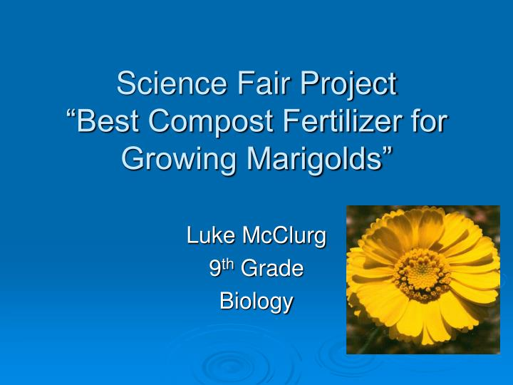 Science fair project best compost fertilizer for growing marigolds