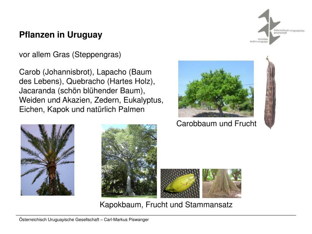 Pflanzen in Uruguay
