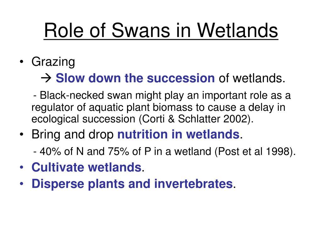 Role of Swans in Wetlands