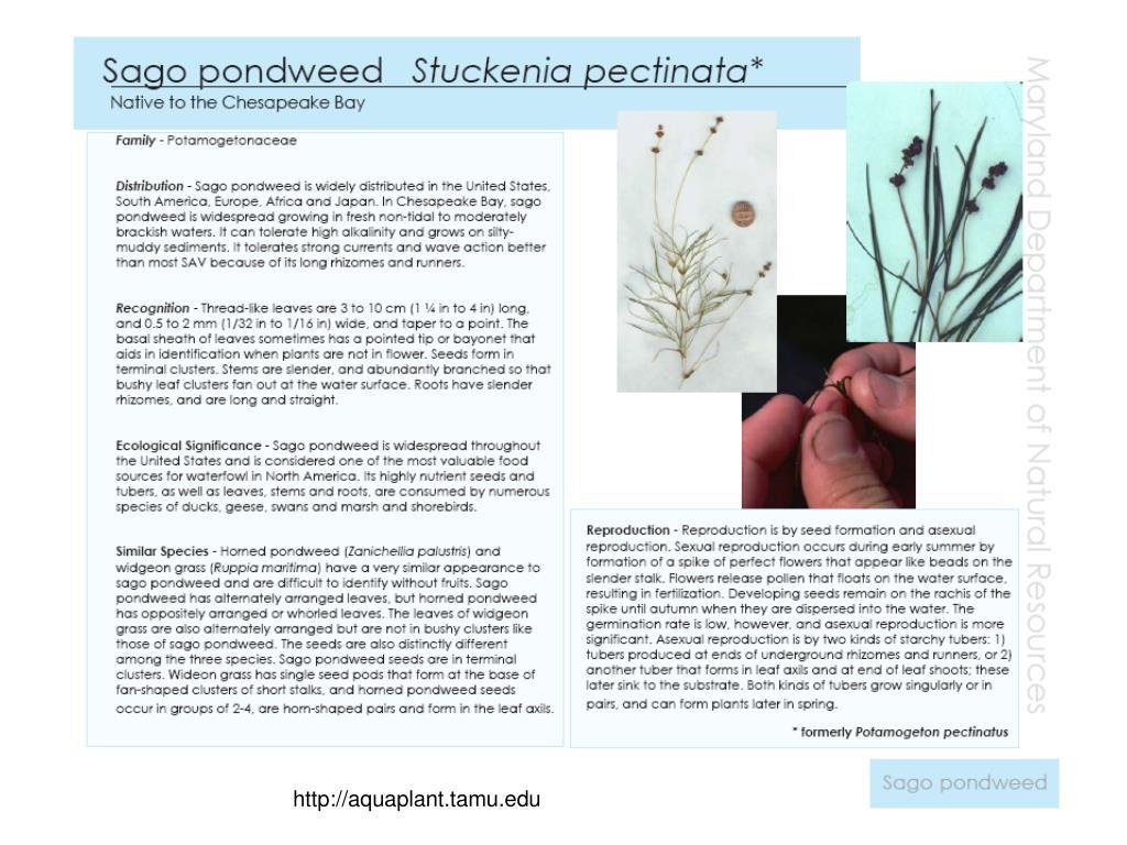 http://aquaplant.tamu.edu