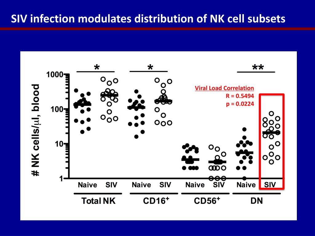 SIV infection modulates distribution of NK cell subsets