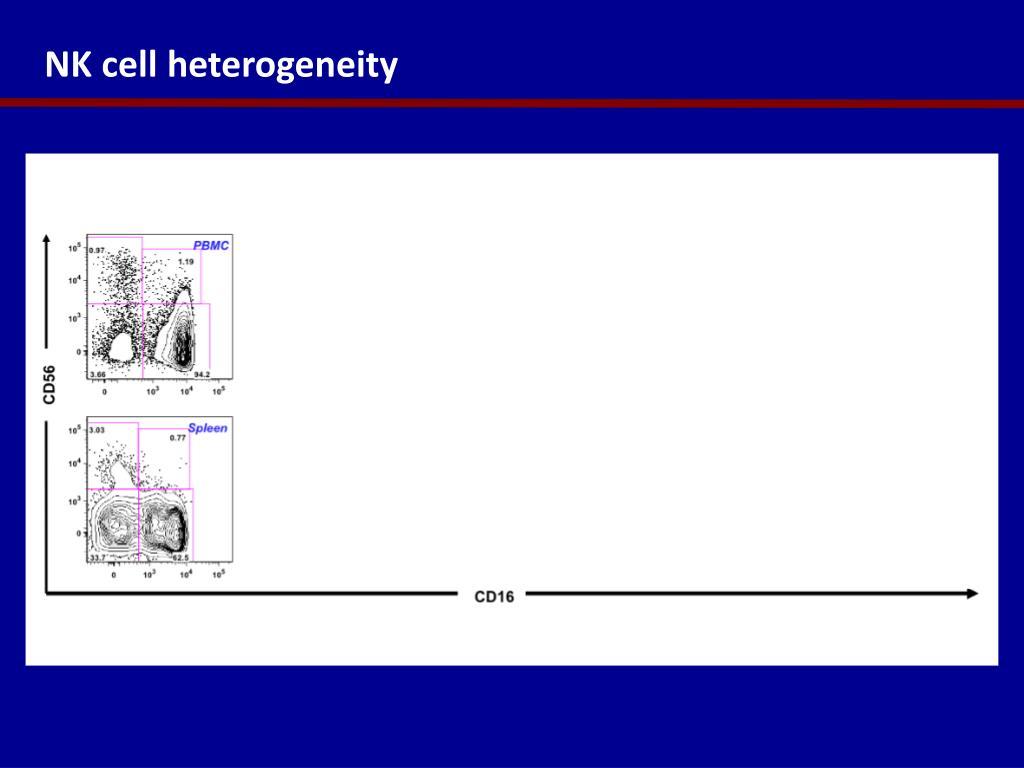 NK cell heterogeneity