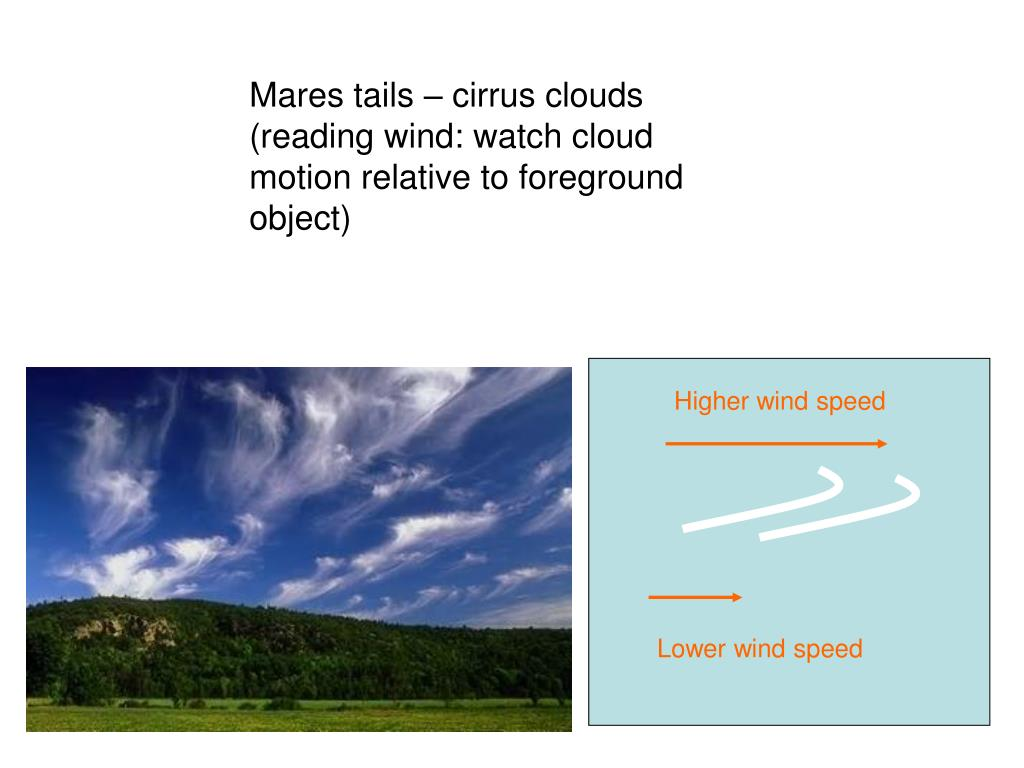 Mares tails – cirrus clouds