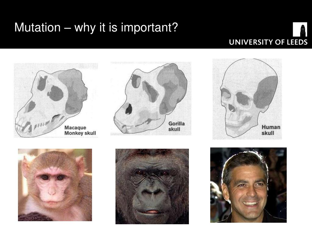 Mutation – why it is important?
