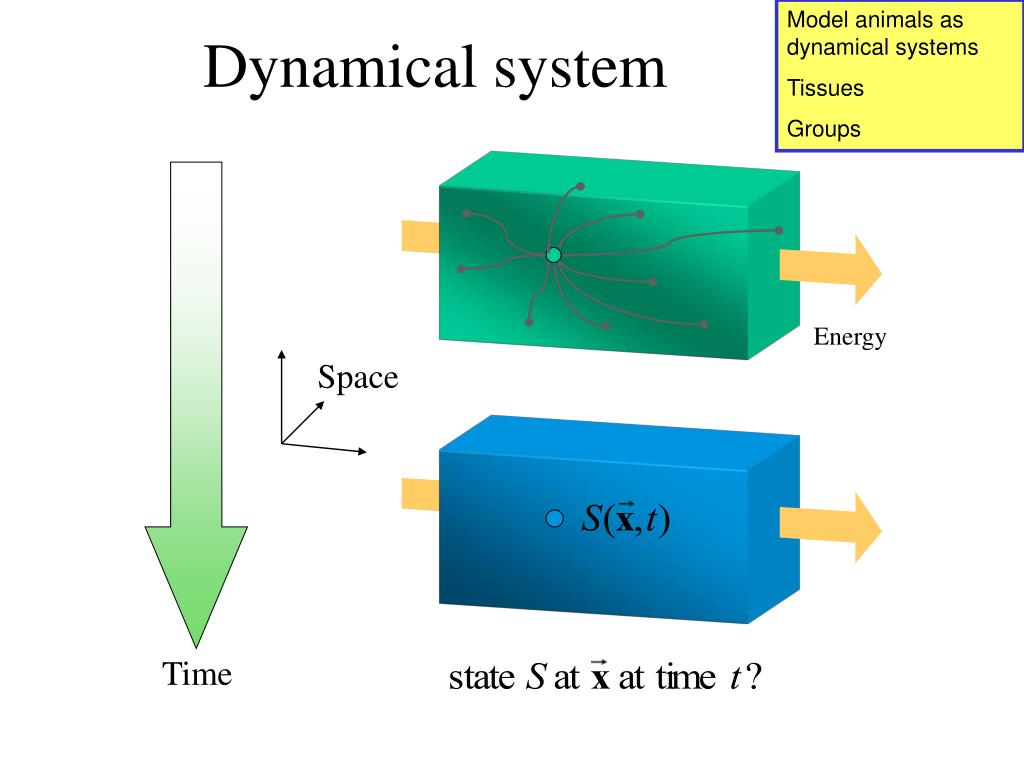 Model animals as dynamical systems
