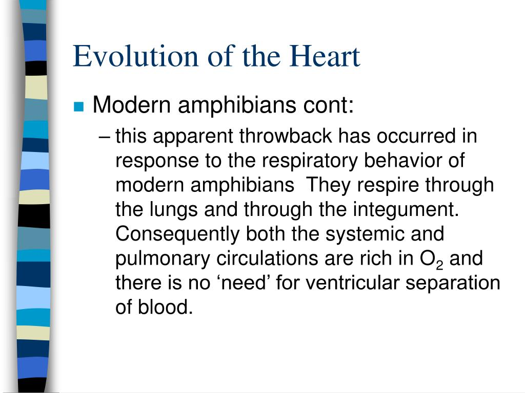 Evolution of the Heart