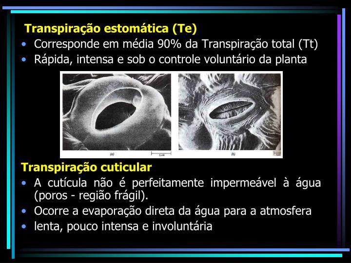 Transpiração estomática (Te)