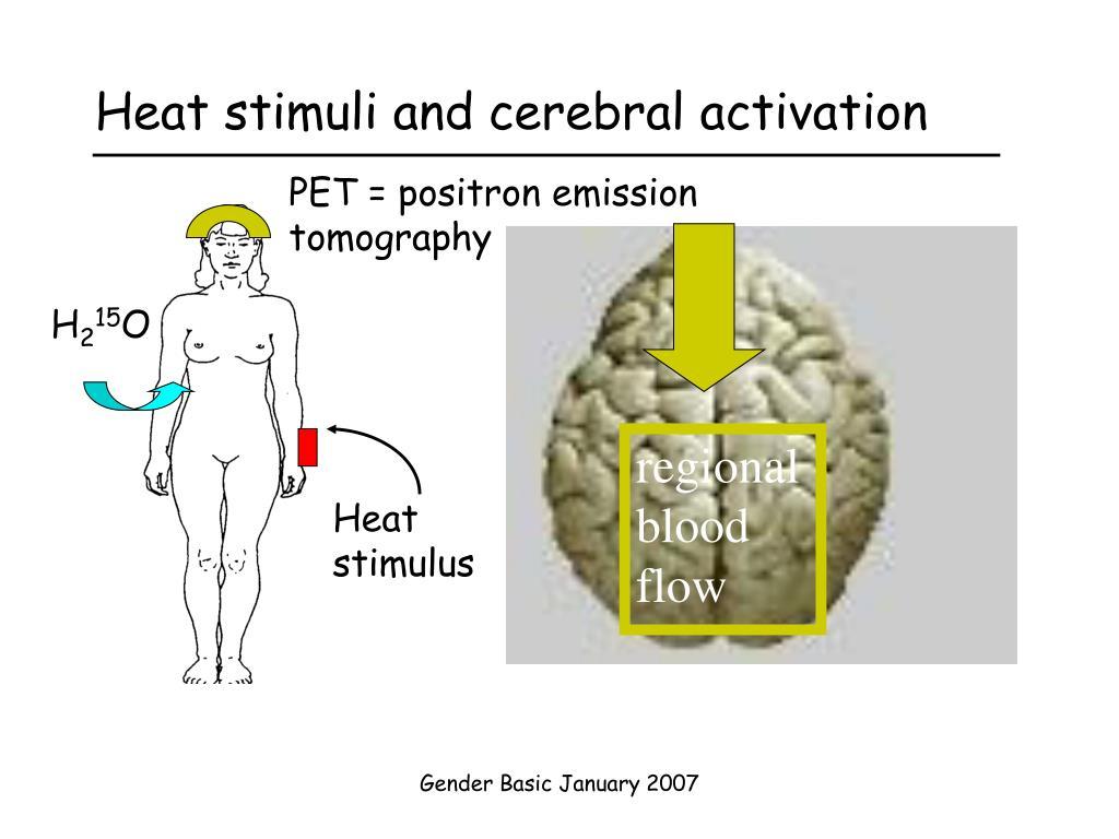 Heat stimuli and cerebral activation