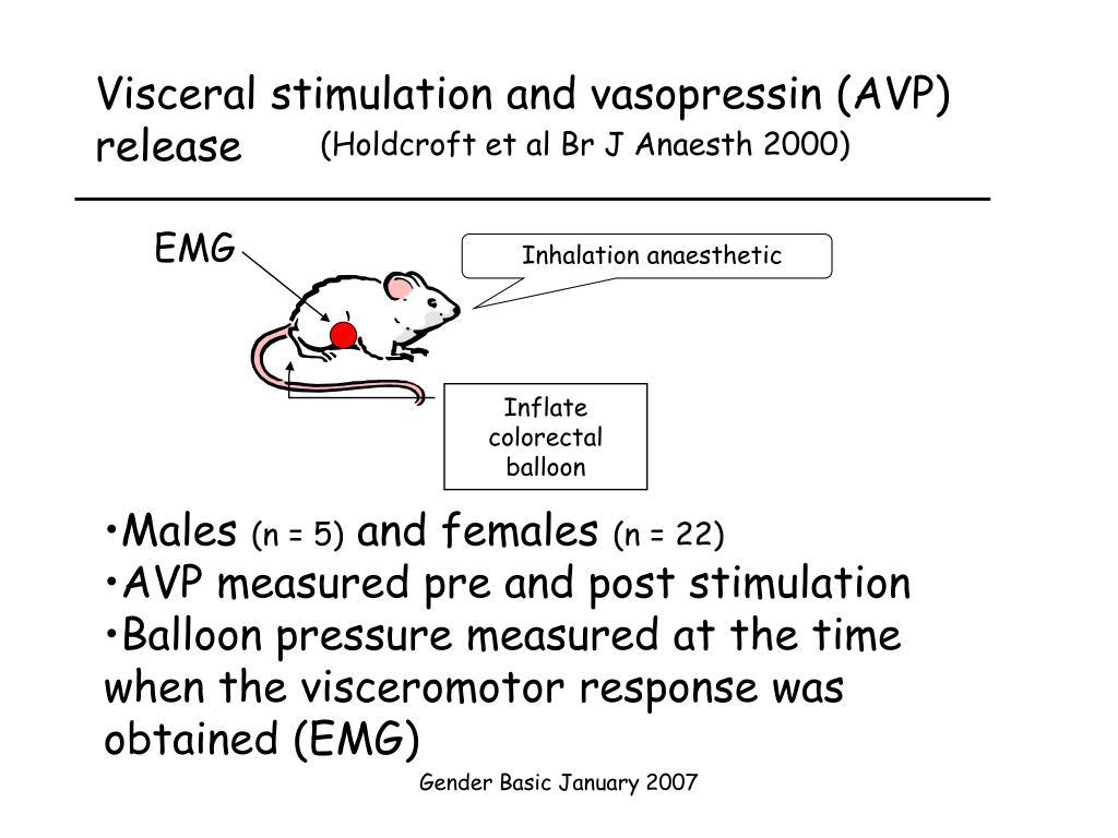 Visceral stimulation and vasopressin (AVP) release