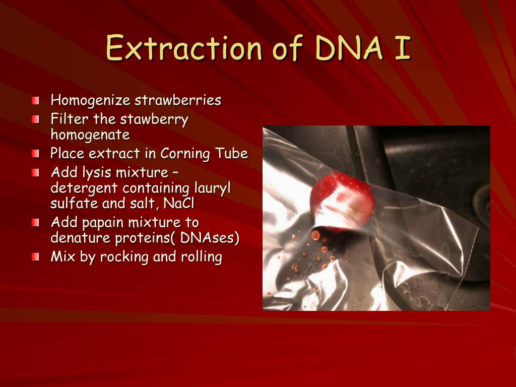 Extraction of DNA I