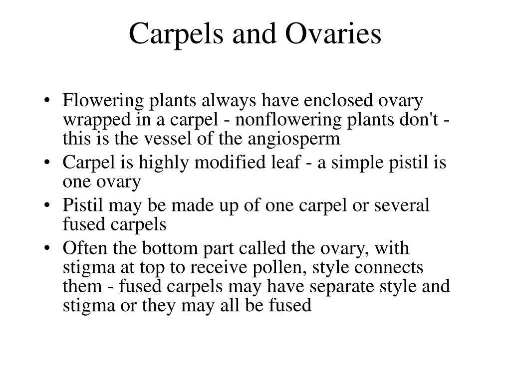 Carpels and Ovaries
