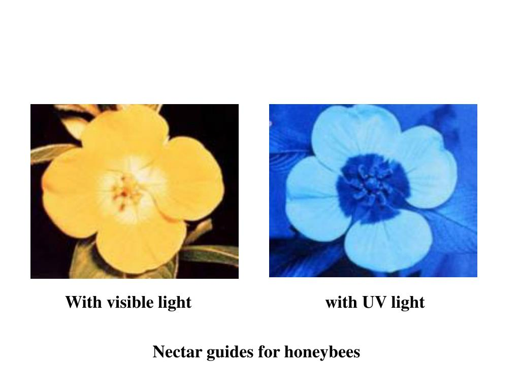 With visible lightwith UV light