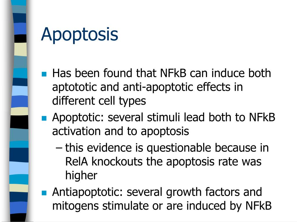 Has been found that NFkB can induce both aptototic and anti-apoptotic effects in different cell types