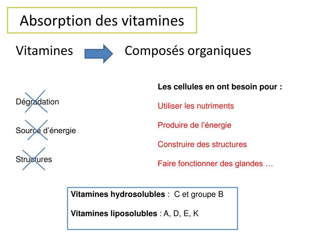 Absorption des vitamines