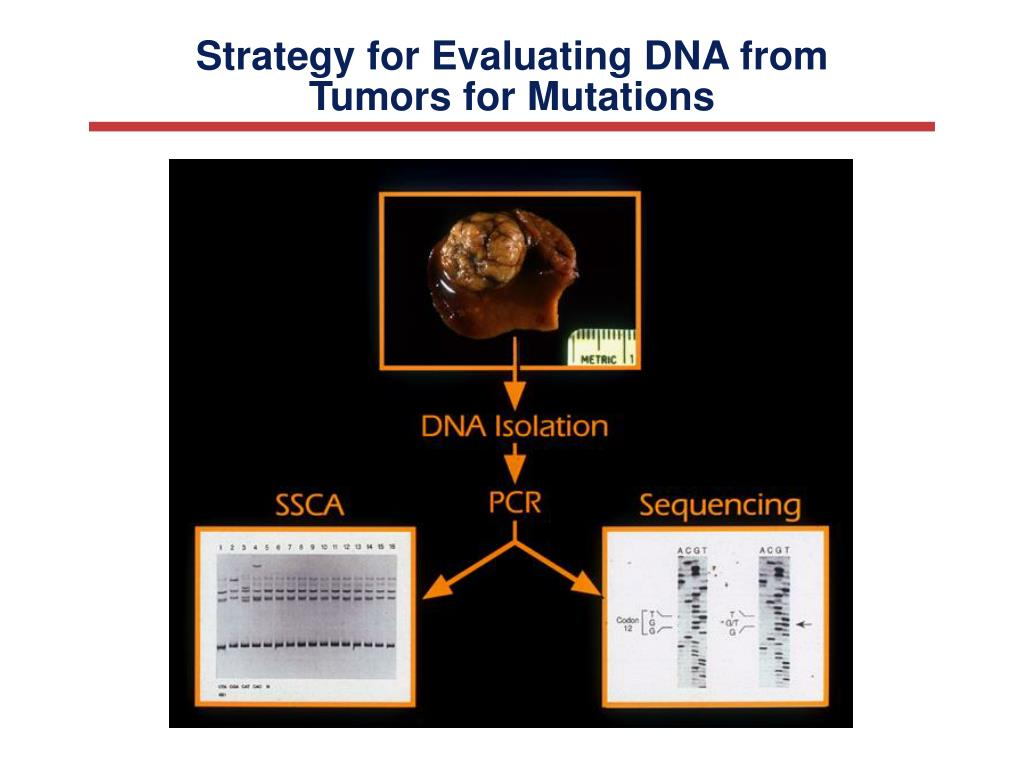 Strategy for Evaluating DNA from