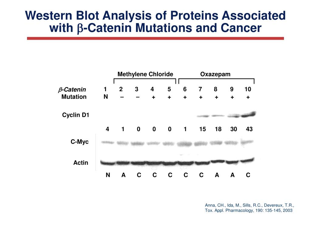 Western Blot Analysis of Proteins Associated